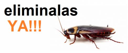 como-eliminar-cucarachas