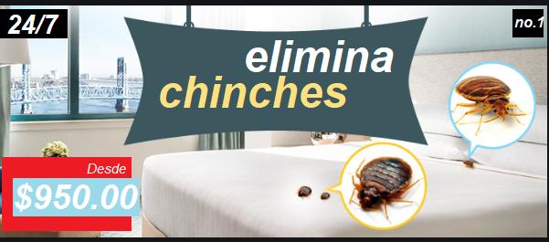elimina chinches en Tláhuac